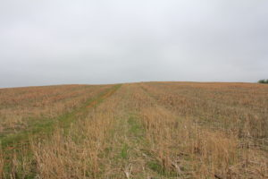 15. The immediate reverse slope of some of the high ground over which the Irish Brigade advanced. On cresting this ridge they faced directly into Bloody Lane.