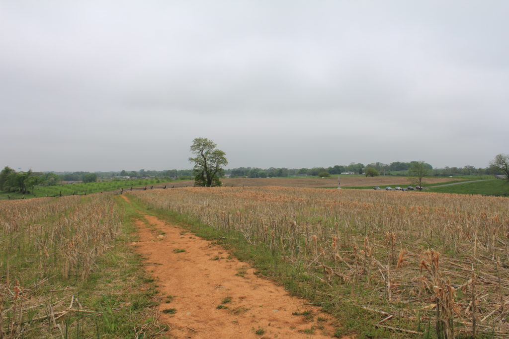 25. View that some of the Irish Brigade, likely men of the 29th Masachusetts, had over the Sunken Lane towards the Piper Cornfield.