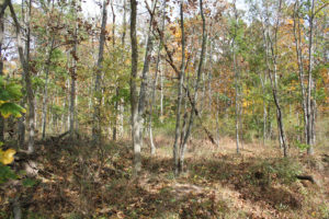 The Herbst Woods, the terrain through which the Second Wisconsin fought on the first day at Gettysburg (Damian Shiels)