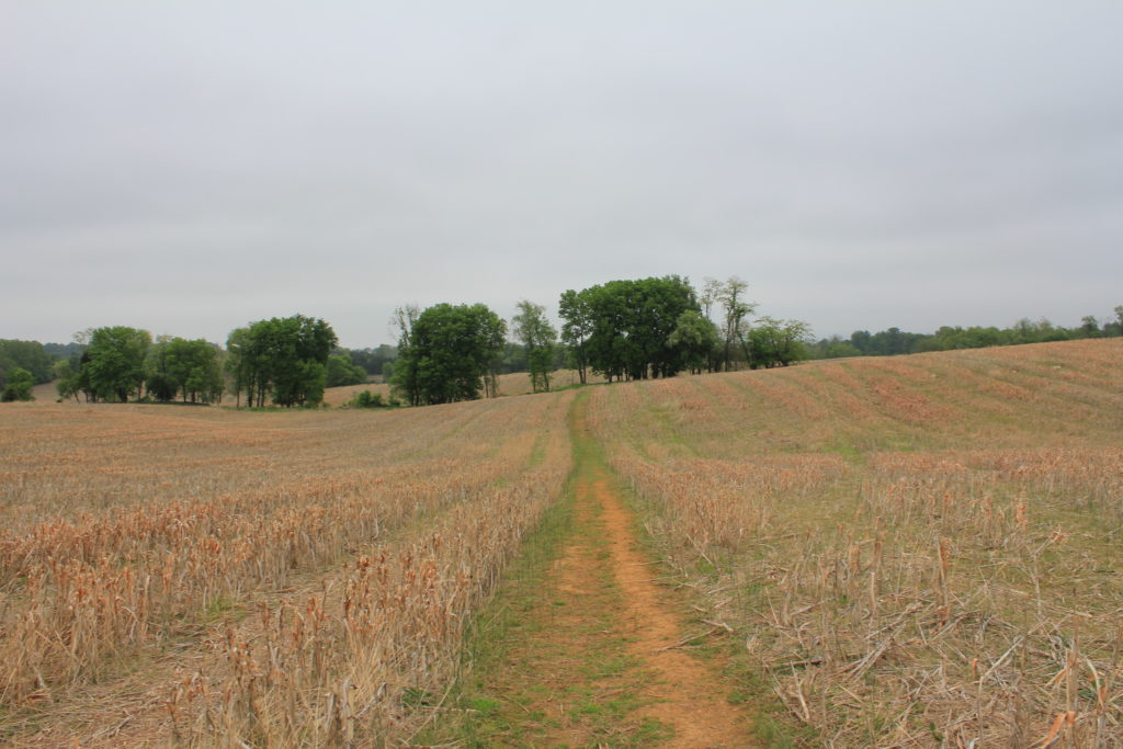 9. View that Confederate skirmishers would have had towards the advancing Irish Brigade.